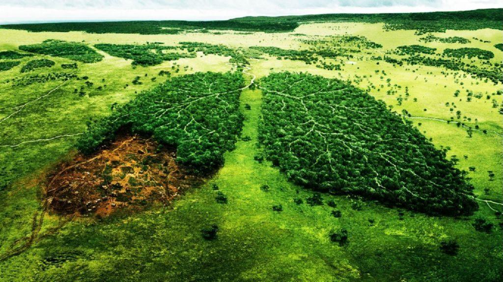alianza-estrategica-contra-la-deforestacion-1024x575
